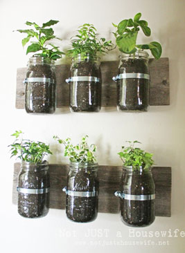herbs-in-mason-jars-mounted-on-the-wall