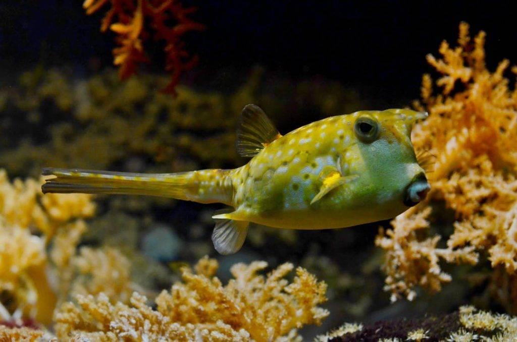 Under Water Golden Fish