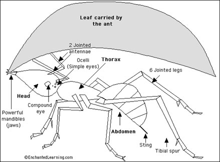 ICAS Science question leaf cutter ant