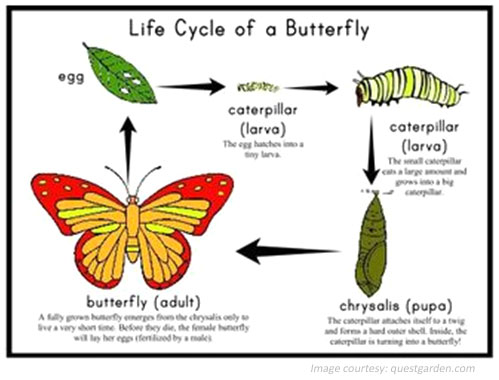 English Writing Worksheet - Life Cycle of a Butterfly
