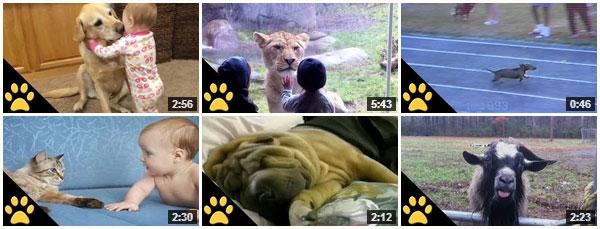 AFV Animal Videos