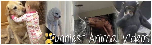 Funniest Kids Videos