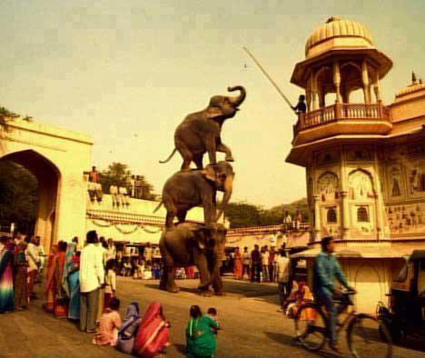 Amazing And Funny Elephants Photo