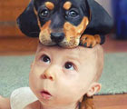 animals-on-top-of-a-cute-baby