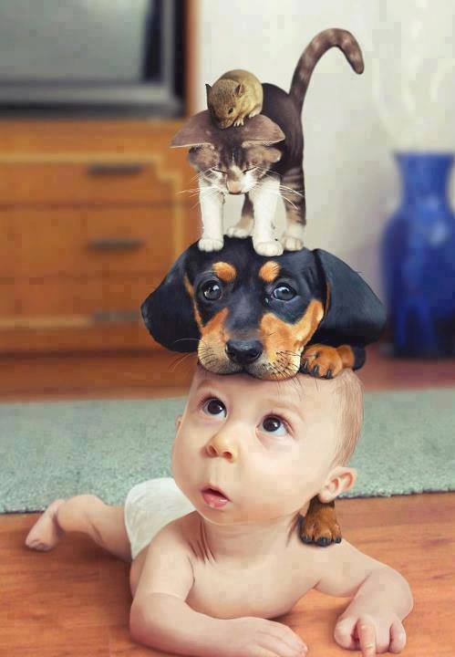 Funny Animals And Baby Photo