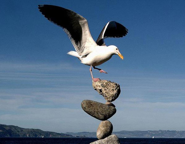 Bird and Stones