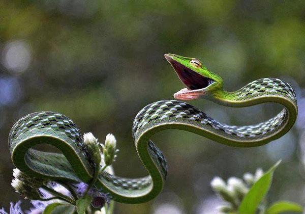 Creative Snake