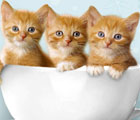 cute-baby-animals-wallpapers-kittens-funny