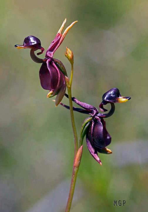 Cute Funny Plant