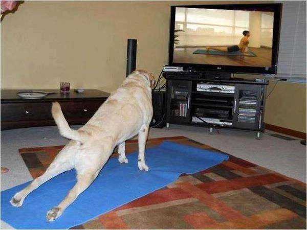 Funny Dog Exercise