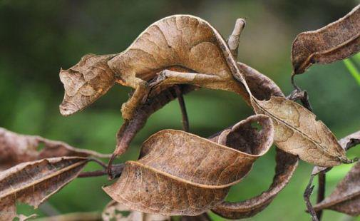 Funny Pic - Funny Leaf Art