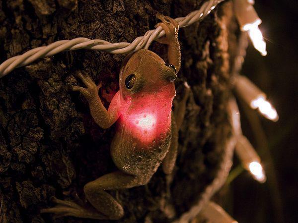 Fun Pic - Electric Frog