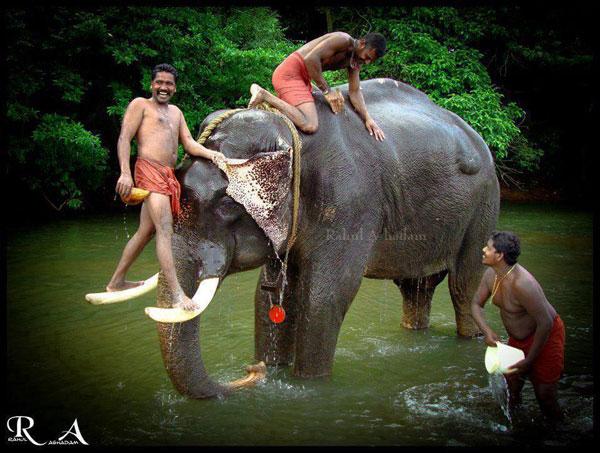 Funny image - Elephant Service