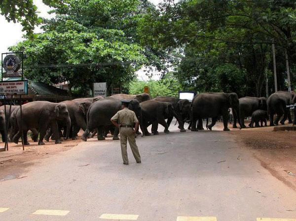 Funny Photo - Elephants Rally