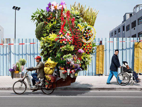 Flowers in Cycle