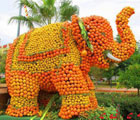 Froots Elephant