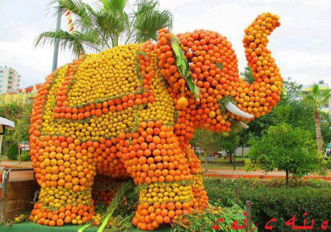 Amazing Creation - Fruits Elephant