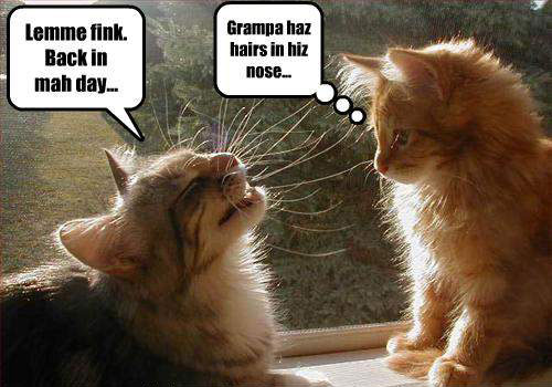 Funny Animal Talk Funny Photo