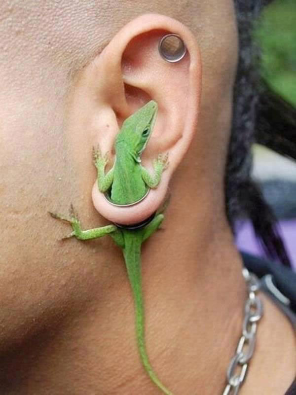 Funny Ear Style Photo