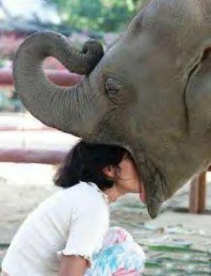 Girl Kissing Elephant
