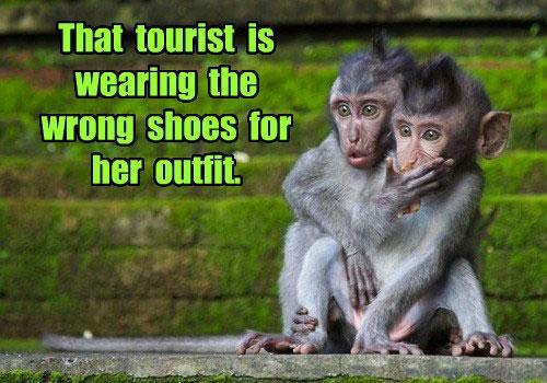 Monkey Fun Expression