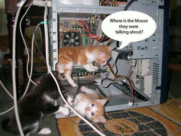 Mouse and Kitties Joke