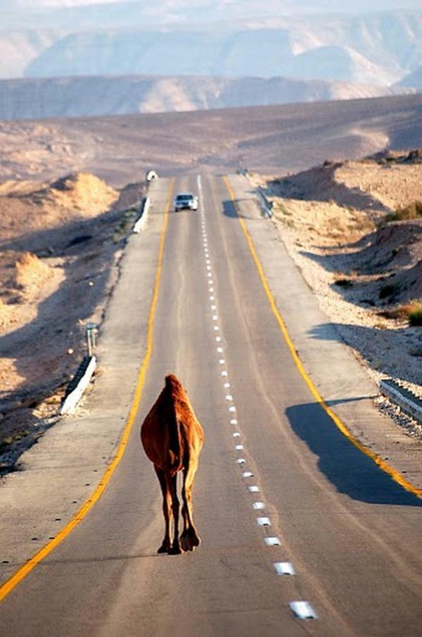 Funny One Way Traffic