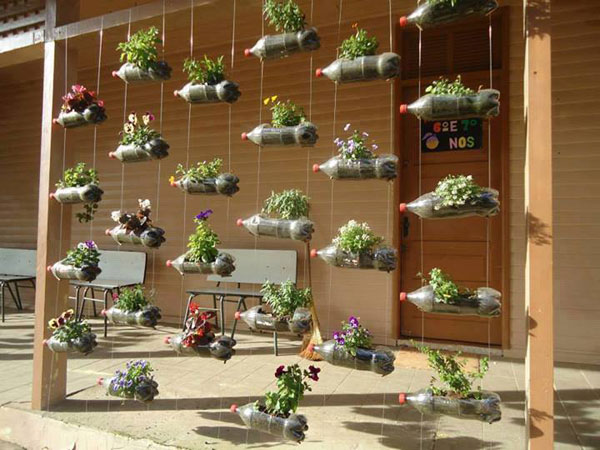 Funny Photo of Plants in Plastic Bottles