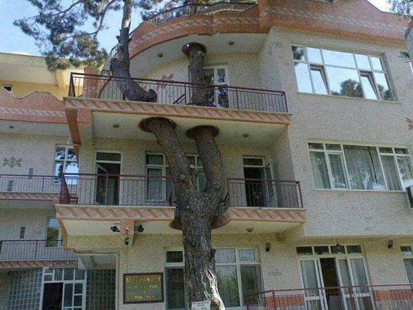 Tree Inside the House