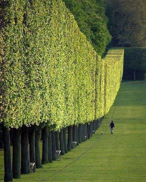 Beautiful Wall Made by Trees