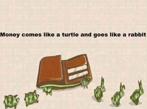 STurtle-Rabbit Joke Fun Image