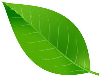Green Color Leaf