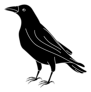 Black Color Crow