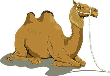Brown Color Camel