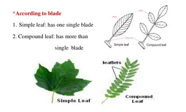 Parts of a plant   Science lessons and worksheets for children