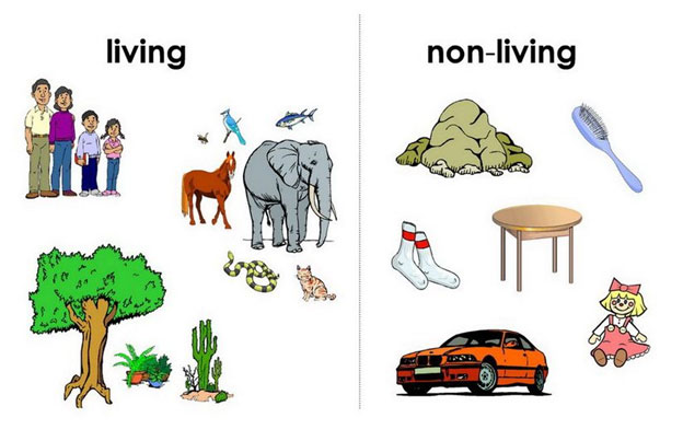 Living and non living things science lessons and for Living and nonliving things coloring pages